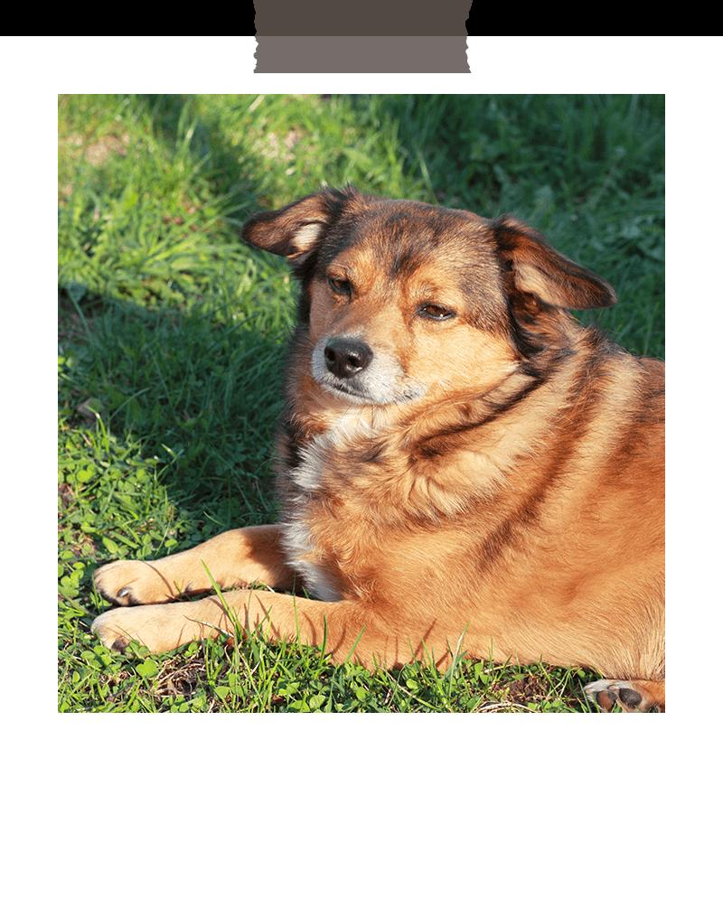 rudolfstein-alpakas-hof-hund